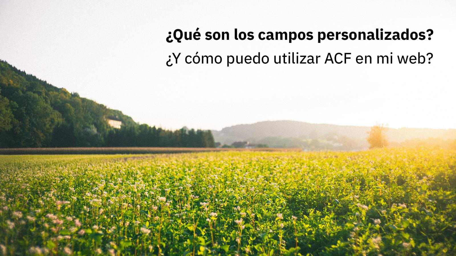 ¿Qué son los campos personalizados? ¿Y cómo puedo utilizar ACF en mi web?